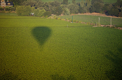 Shadow over the vineyard - Napa, California
