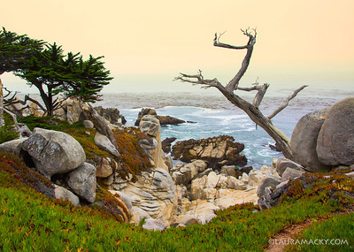 Ghost Tree @ Pebble Beach