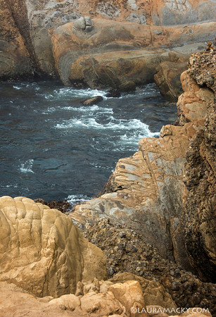 Point Lobos Cove