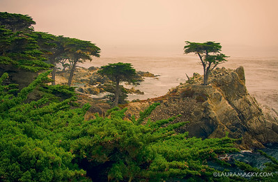 The Lone Cypress @ Pebble Beach, California